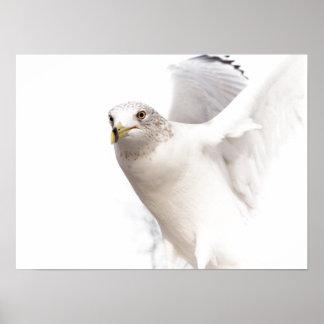 Dove Pure White Art Print Poster
