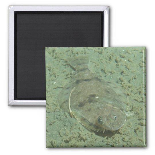 Dover Sole Fish Square Magnet