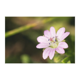 Dovesfoot Geranium Canvas Print