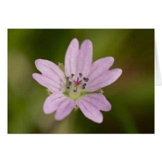 Dovesfoot Geranium Card