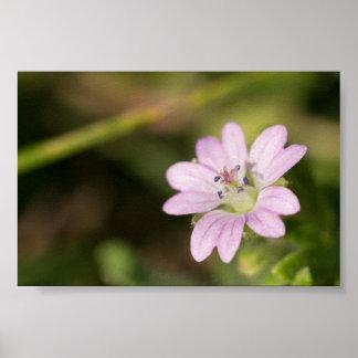 Dovesfoot Geranium Print