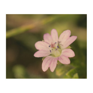 Dovesfoot Geranium Wood Wall Decor