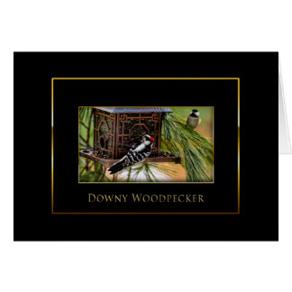 Downy Woodpecker -  Bird Collection - Black/Gold Card