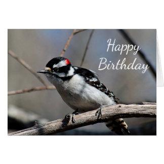 Downy Woodpecker Card