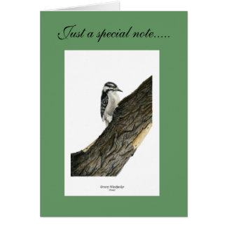 Downy Woodpecker (Female) Card