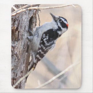 Downy Woodpecker Mouse Pad