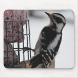 Downy Woodpecker Mouse Pads
