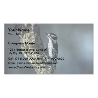 Downy woodpecker pack of standard business cards