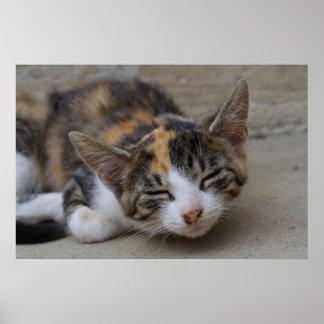 Dozing Calico Kitten Poster