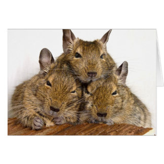 Dozing Degu Trio Card