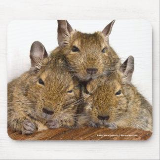 Dozing Degu Trio Mousepad