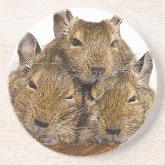 Dozing Degu Trio Sandstone Coaster