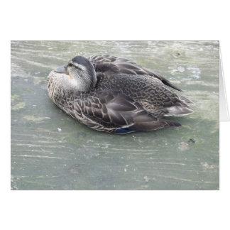 Dozing Duck Greeting Card