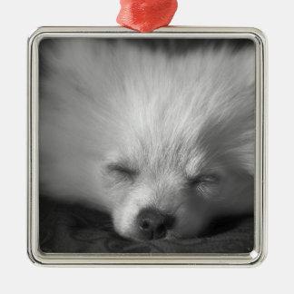 Dozing Pomeranian Silver-Colored Square Decoration