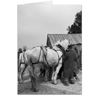 Draft Horse Auction, 1930s Cards