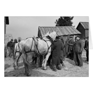 Draft Horse Auction 1930s Greeting Cards
