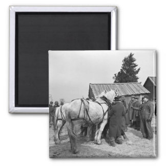 Draft Horse Auction, 1930s Magnet