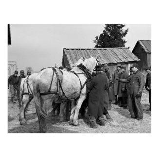 Draft Horse Auction 1930s Postcards