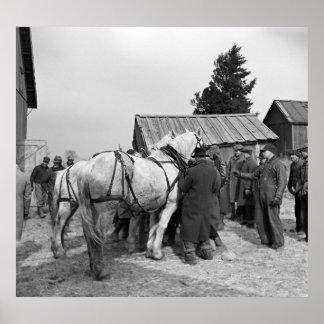 Draft Horse Auction 1930s Print