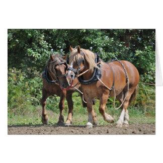 Draft horses in harness birthday card
