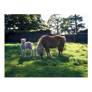 Draft Mare with Foal Postcard