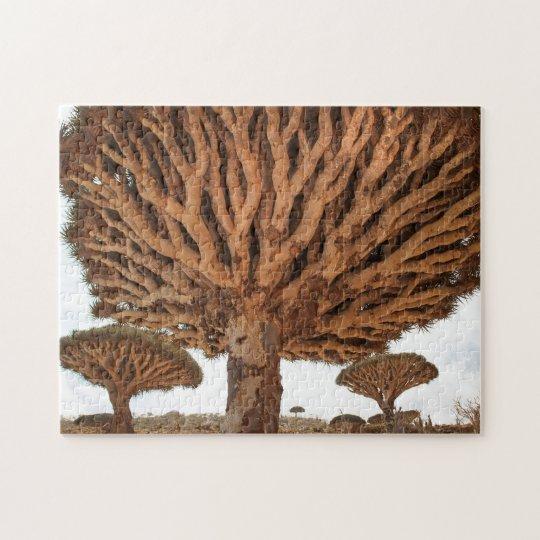 Dragon Blood Tree, Socotra Island, Yemen Puzzles