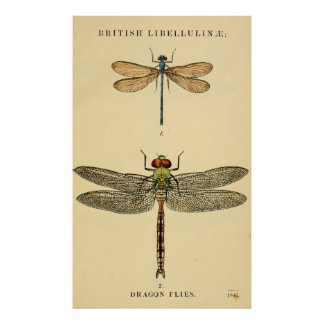 Dragon Flies Litho Poster