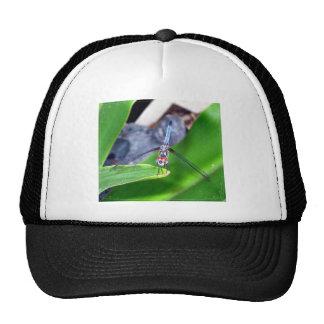 Dragon Fly Cap