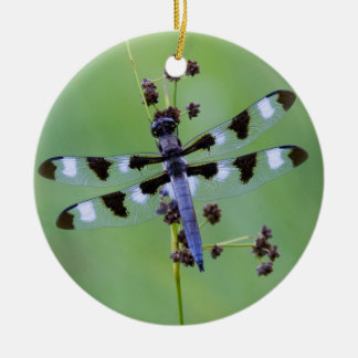 Dragon fly perched on grass, Canada Round Ceramic Decoration