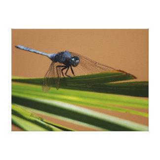 Dragon Fly Resting On Leaf, Kruger National Canvas Print