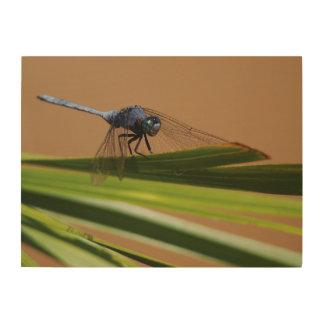 Dragon Fly Resting On Leaf, Kruger National Wood Wall Art