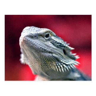 Dragon Head Postcard