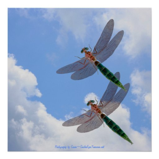 Dragonflies Blue Sky Fluffy Clouds Nature Print