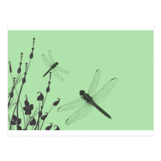 Dragonflies in the Grass Post Cards
