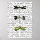 Dragonflies Print 3