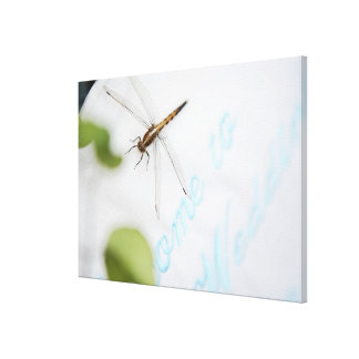 Dragonfly 12 stretched canvas prints