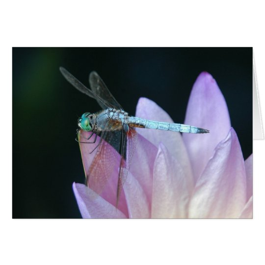 Dragonfly 1 card