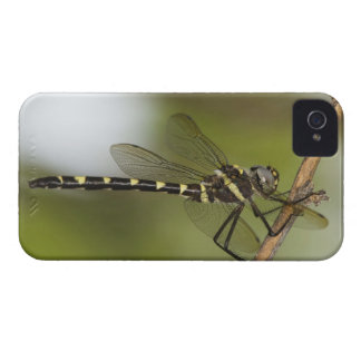 Dragonfly 5 Case-Mate iPhone 4 case