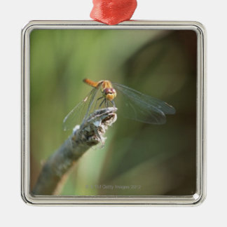 Dragonfly 5 christmas ornament