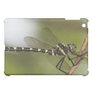 Dragonfly 5 iPad mini case