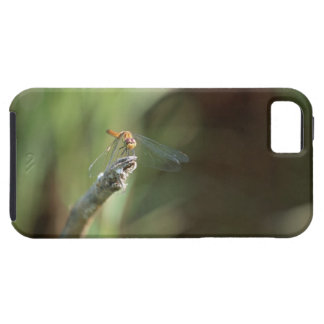 Dragonfly 5 iPhone 5 cases