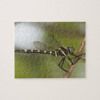 Dragonfly 5 jigsaw puzzle