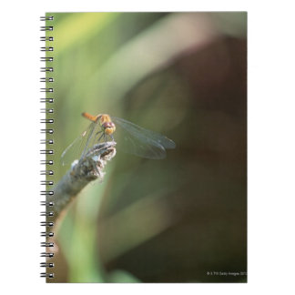 Dragonfly 5 notebook