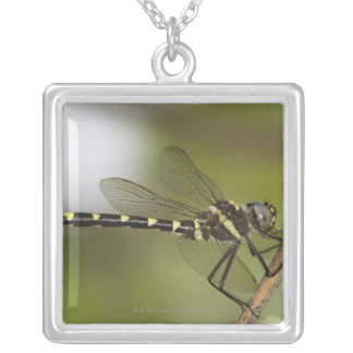 Dragonfly 5 silver plated necklace
