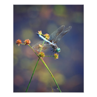 Dragonfly at rest, nature's jewel art photo