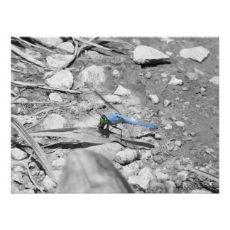 Dragonfly Blue Poster