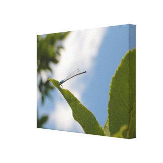 Dragonfly | canvas print