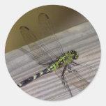 Dragonfly Classic Round Sticker