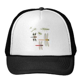 dragonfly-clip-art-4 cap