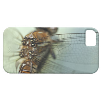 Dragonfly close-up iPhone 5 cover
